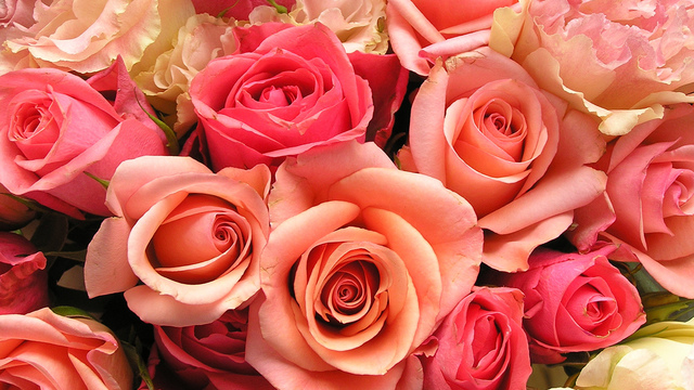 roses-flowers-valentines-day_1517879321399_340223_ver1-0_33247436_ver1-0_640_360_536384