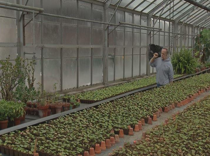 olmsted parks greenhouses_1520873408269.JPG.jpg