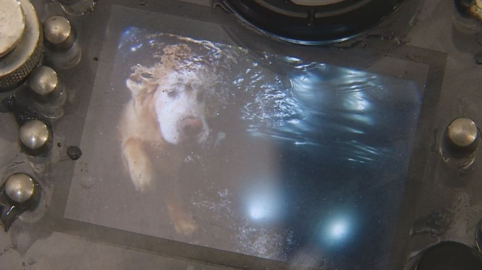 seth casteel underwater dog photo_1530469179735.JPG.jpg
