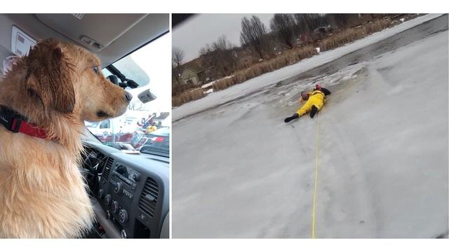 dog rescued_1551046976034.jpg_74582368_ver1.0_640_360_1551047293965.jpg.jpg