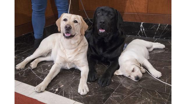 Dogs Popular Breeds_1553101566088
