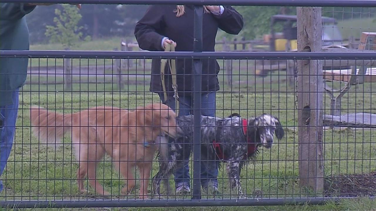 Buffalo Best's Dog Park: Knox Farm State Park