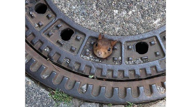 Squirrel_1561107981931_93260203_ver1.0_640_360_1561119044997.jpeg