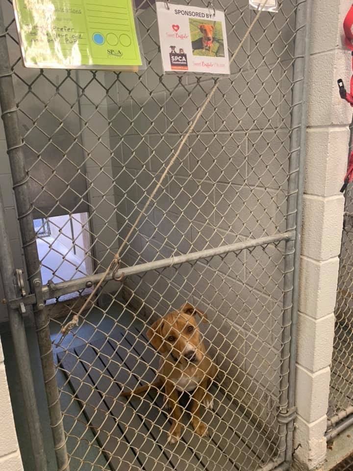"""Sponsor a Cage"""" event at Niagara SPCA asks business owners"""