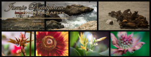 Examples of photography at Jamie Bridgham Photography