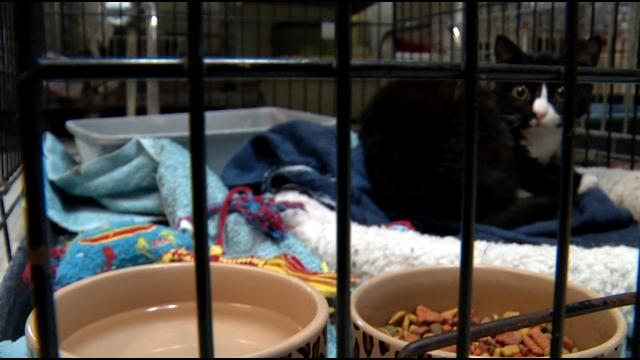 Columbia County Animal Rescue Group Owner Sentenced To Community Service, Probation (Image 1)_26576