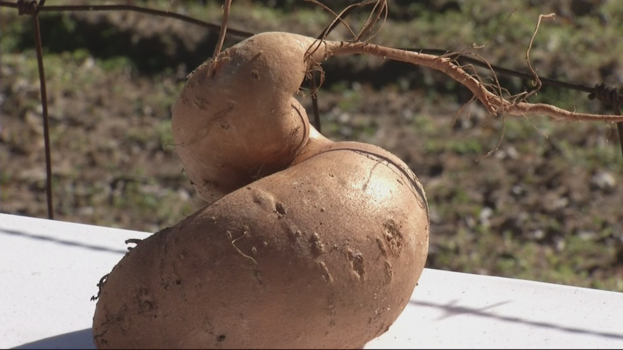 OTS-Sweet-Potato_115353