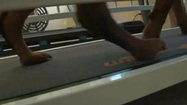pet-treadmill-dog_137991