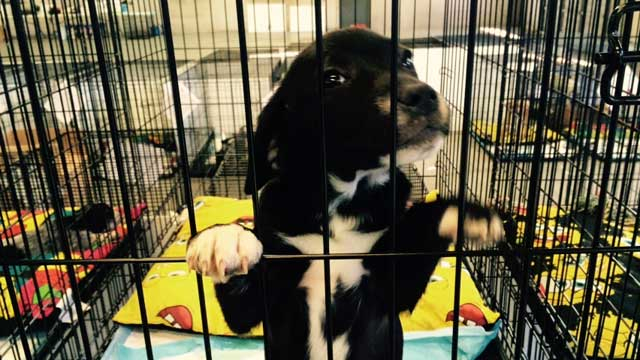 rescueddogs1_85497