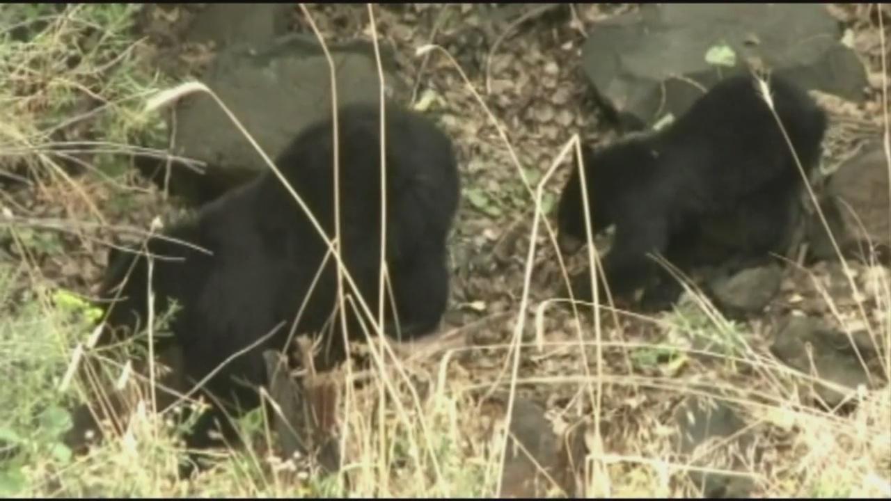 Bears_158155