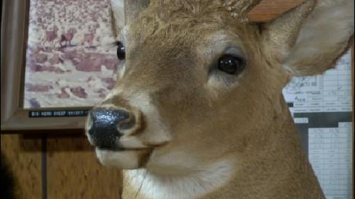 deer-carcass_255399