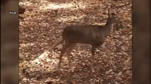 deer 45274DD6041D4EA28AA0C0D550F02DD8_1545328708831.jpg