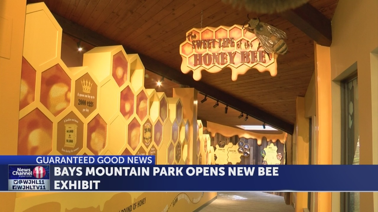 New bee exhibit at Bays Mountain