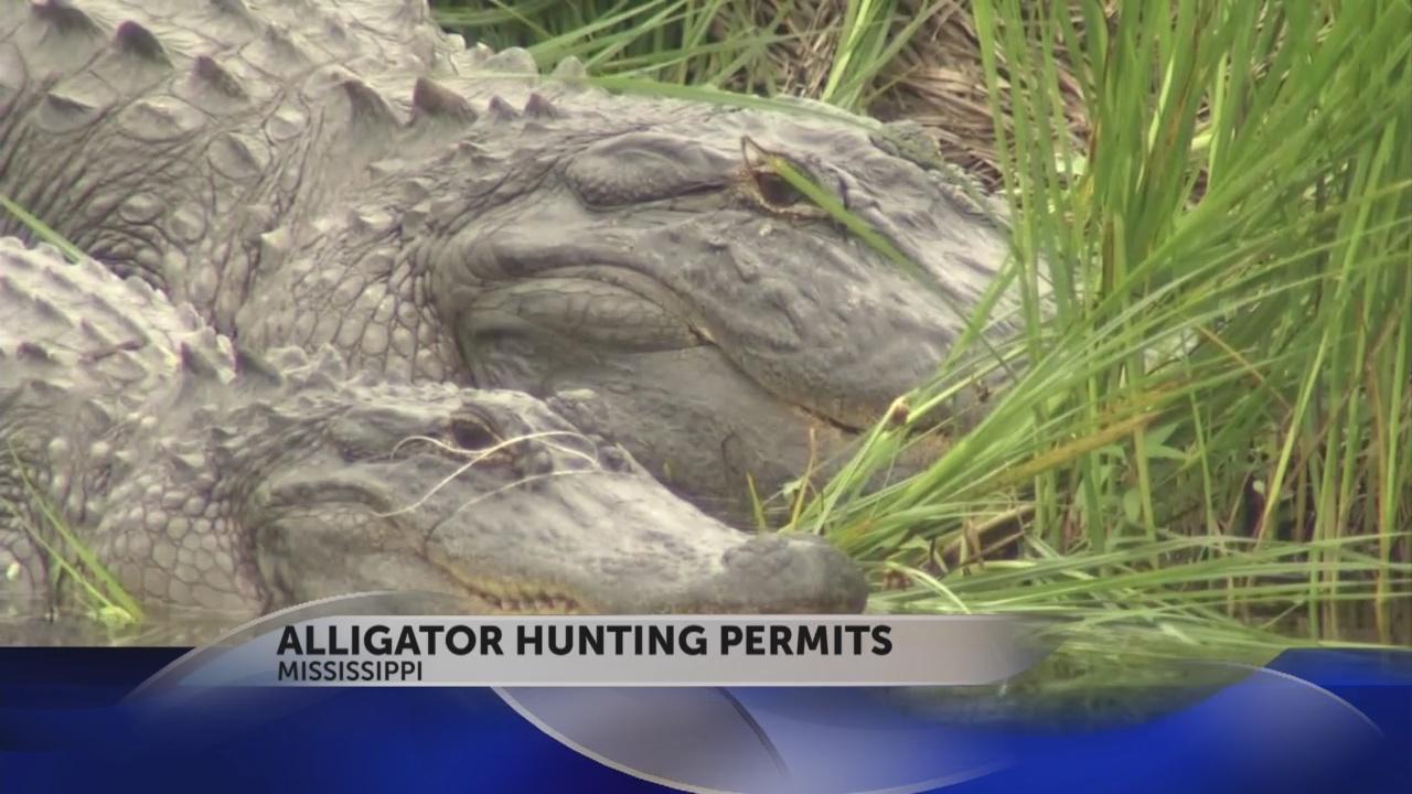 aligator permits snapshot_30665