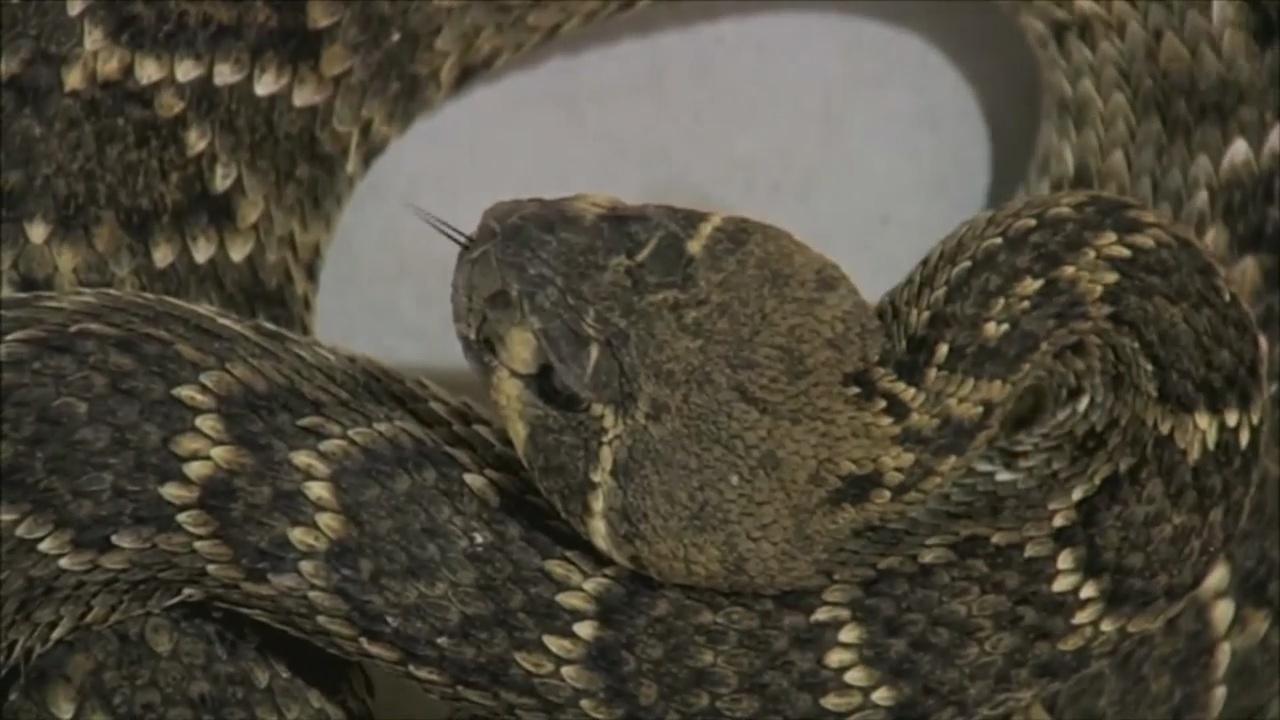 snake_38425