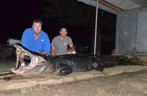 big gator- 826 pound_53490