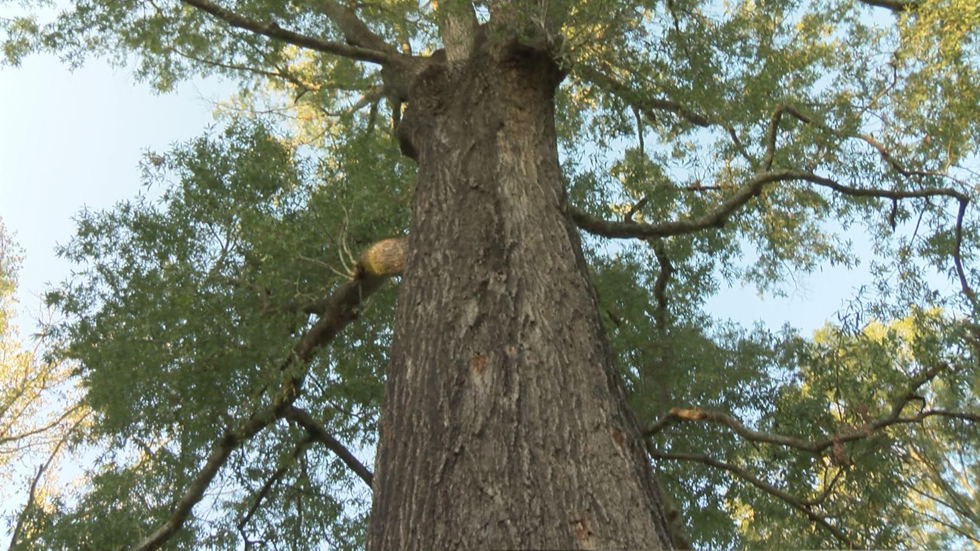 tree_90131