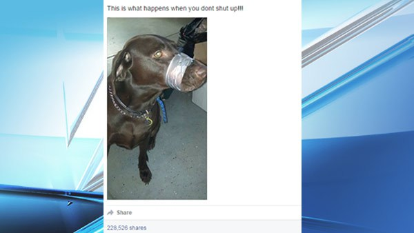 Dog with mouth taped shut_103769