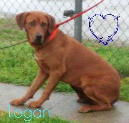 logan_133344