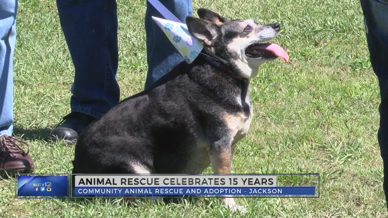 Animal rescue group celebrates 15 years