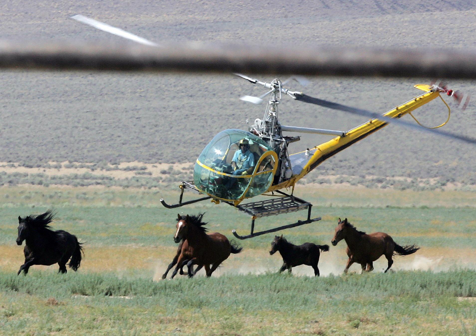 Trump Budget Wild Horses Photo by Brad Horn, AP Photo_333135