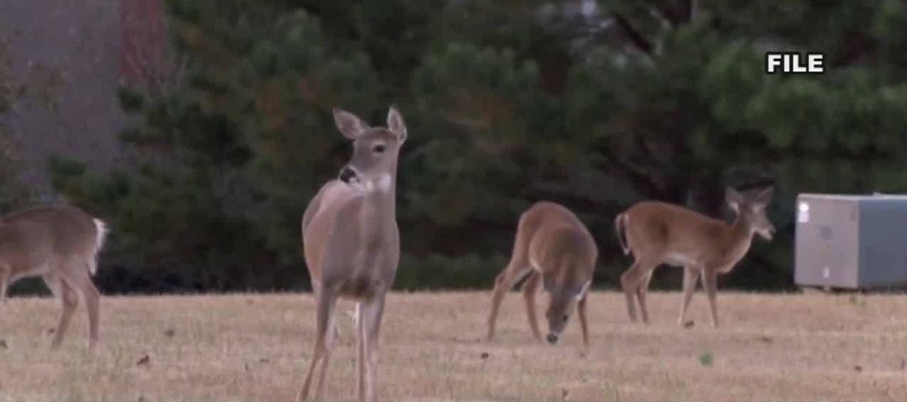 deer 123_1555432407076.JPG.jpg