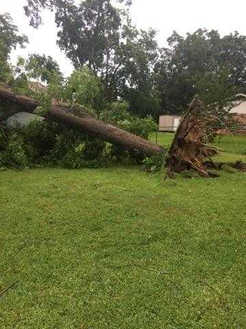 uprooted tree_1561390255639.jpg.jpg
