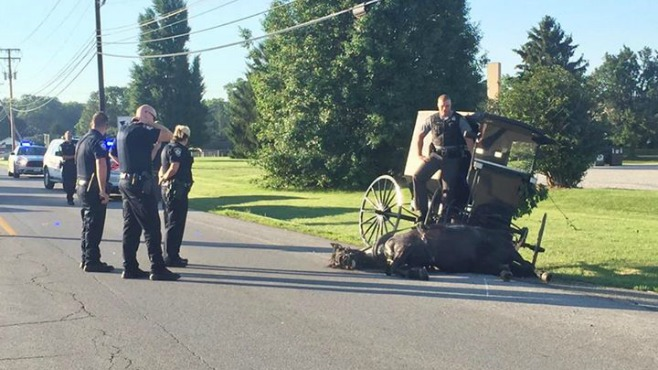 wooster-horse-buggy_375271
