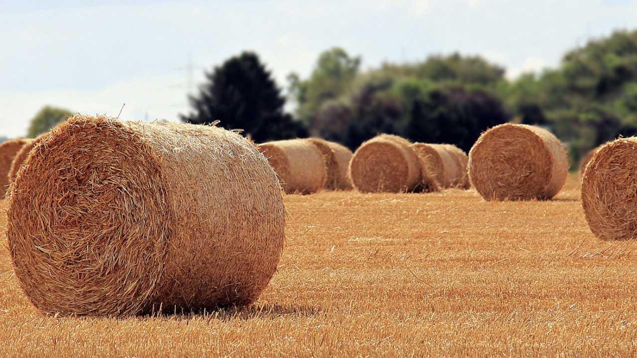 Hay bale, farm generic