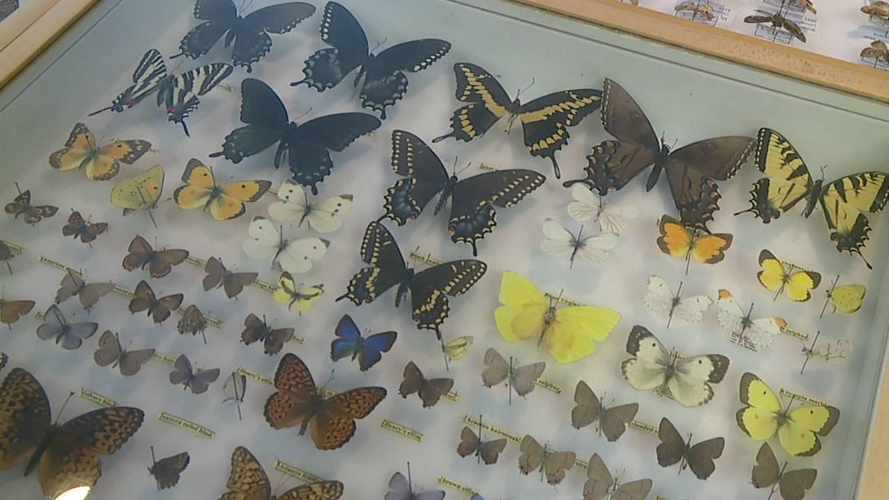 butterfly workshop at YSU