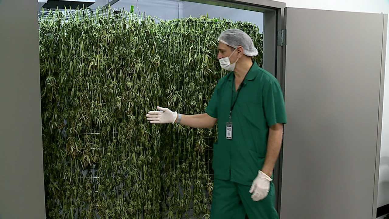 Riviera Creek Holdings medical marijuana facility in Youngstown