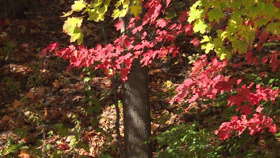 Mill Creek Park in October
