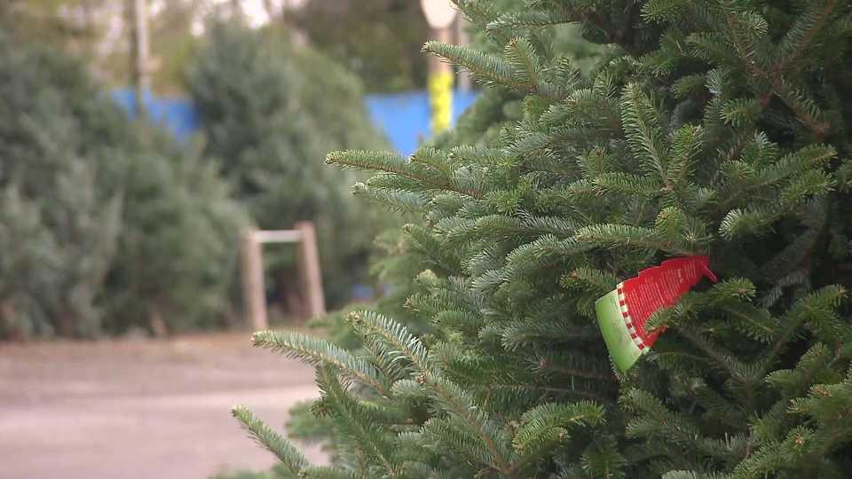 millennial christmas trees