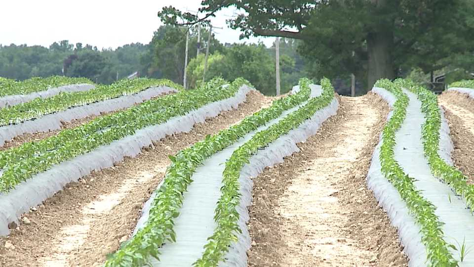 Farm, planting, farmer