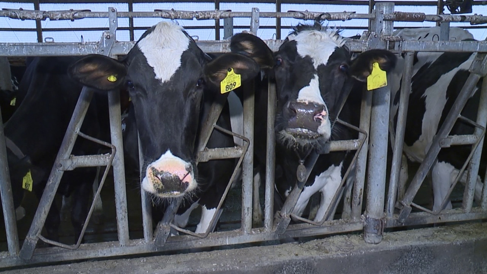Mercer County dairy farm receives Pa. grant to expand