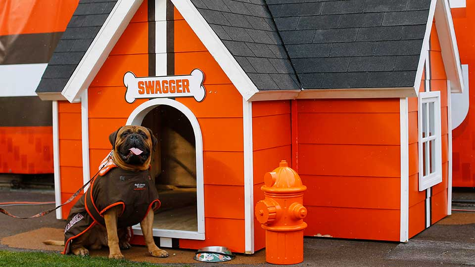 "Cleveland Browns mascot ""Swagger"" sits outside his dog house during an NFL football game between the Cleveland Browns and the Pittsburgh Steelers in Cleveland, Ohio Sunday, Jan. 3, 2016."
