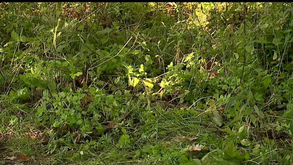 Liberty police and the Trumbull County Coroner are working to identify a man found dead in a remote part of the township on Wednesday morning.