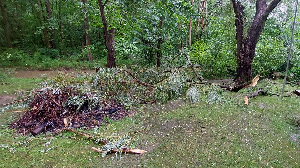 Tree down, Cortland, Ohio