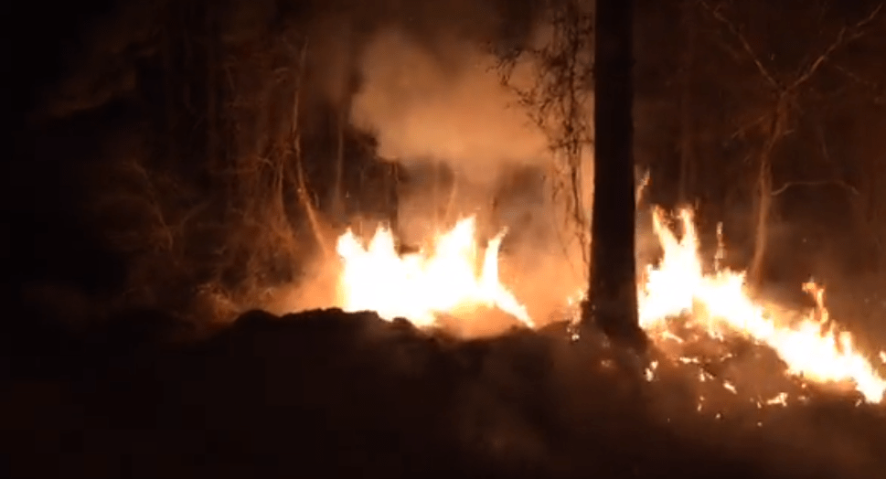 citronelle fire_325643