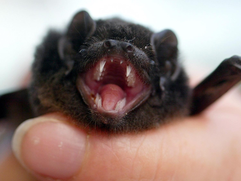 bat generic