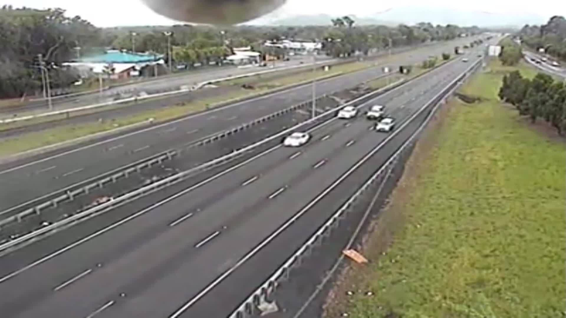Cockatoo plays peek-a-boo with traffic cam