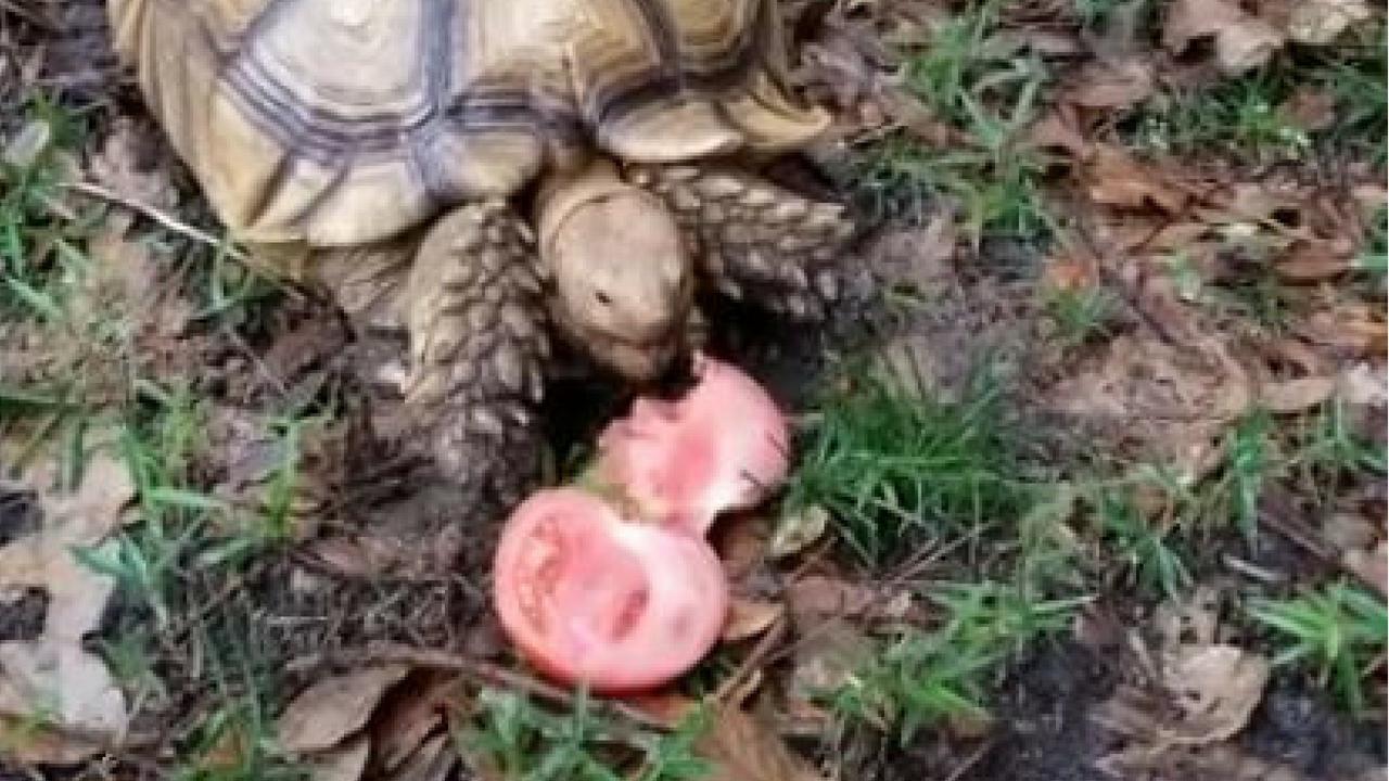 missing tortoise_1530285605222.jpg.jpg