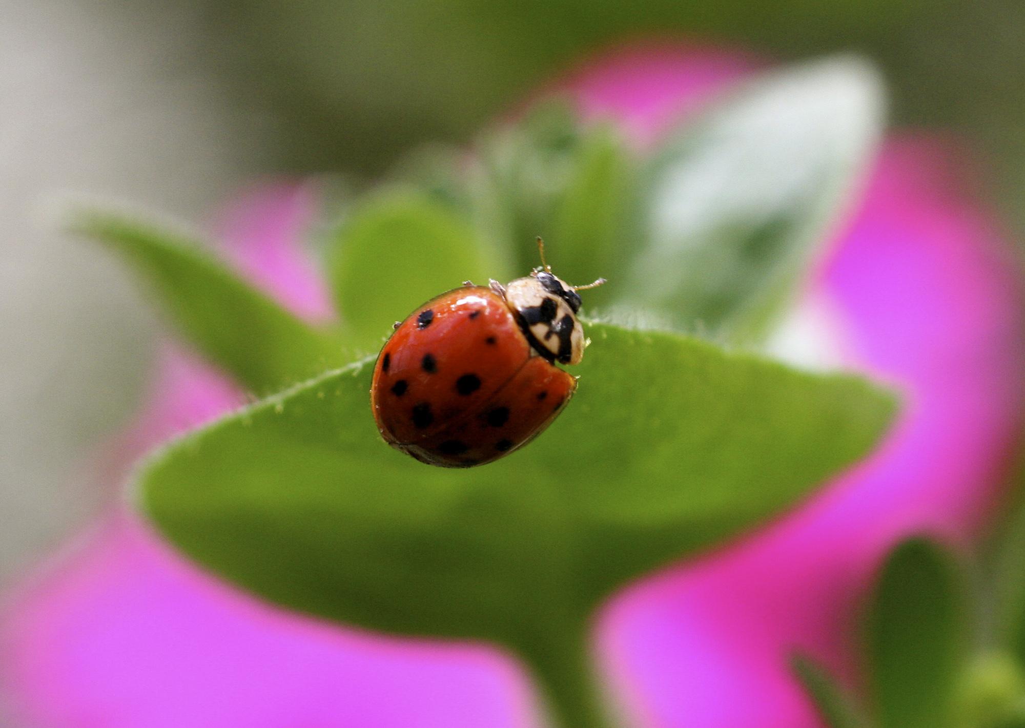 Gardening Good Bugs_1531683671398