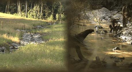 creeks image_1532622724022.PNG.jpg