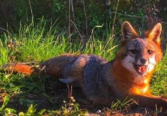 fox-cropped_1531342856352.jpg