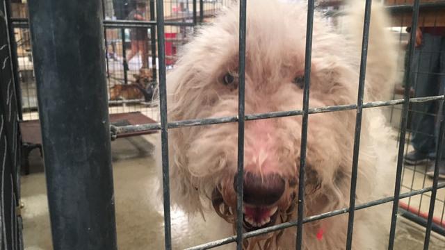 gtown animal cruelty2_1532535804356.JPG_49569939_ver1.0_640_360_1532560279636.jpg.jpg