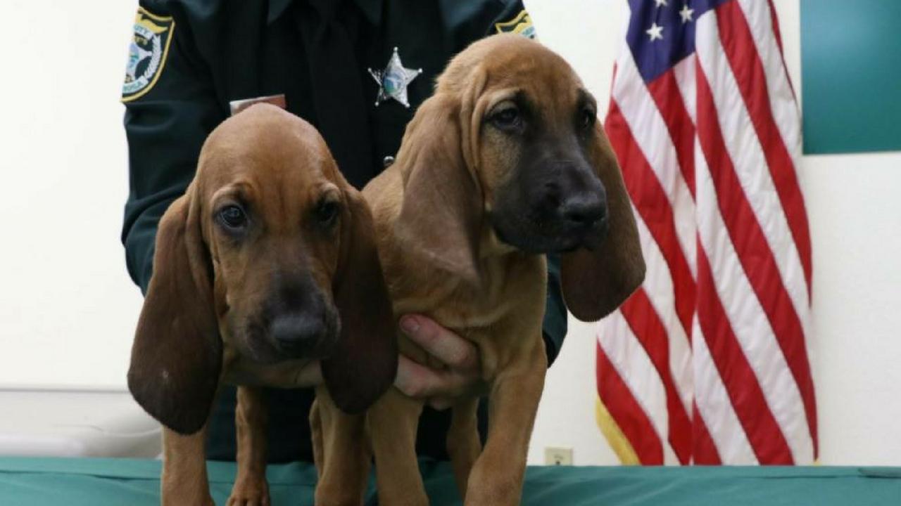 santa rosa county bloodhounds_1533663596600.jpg.jpg