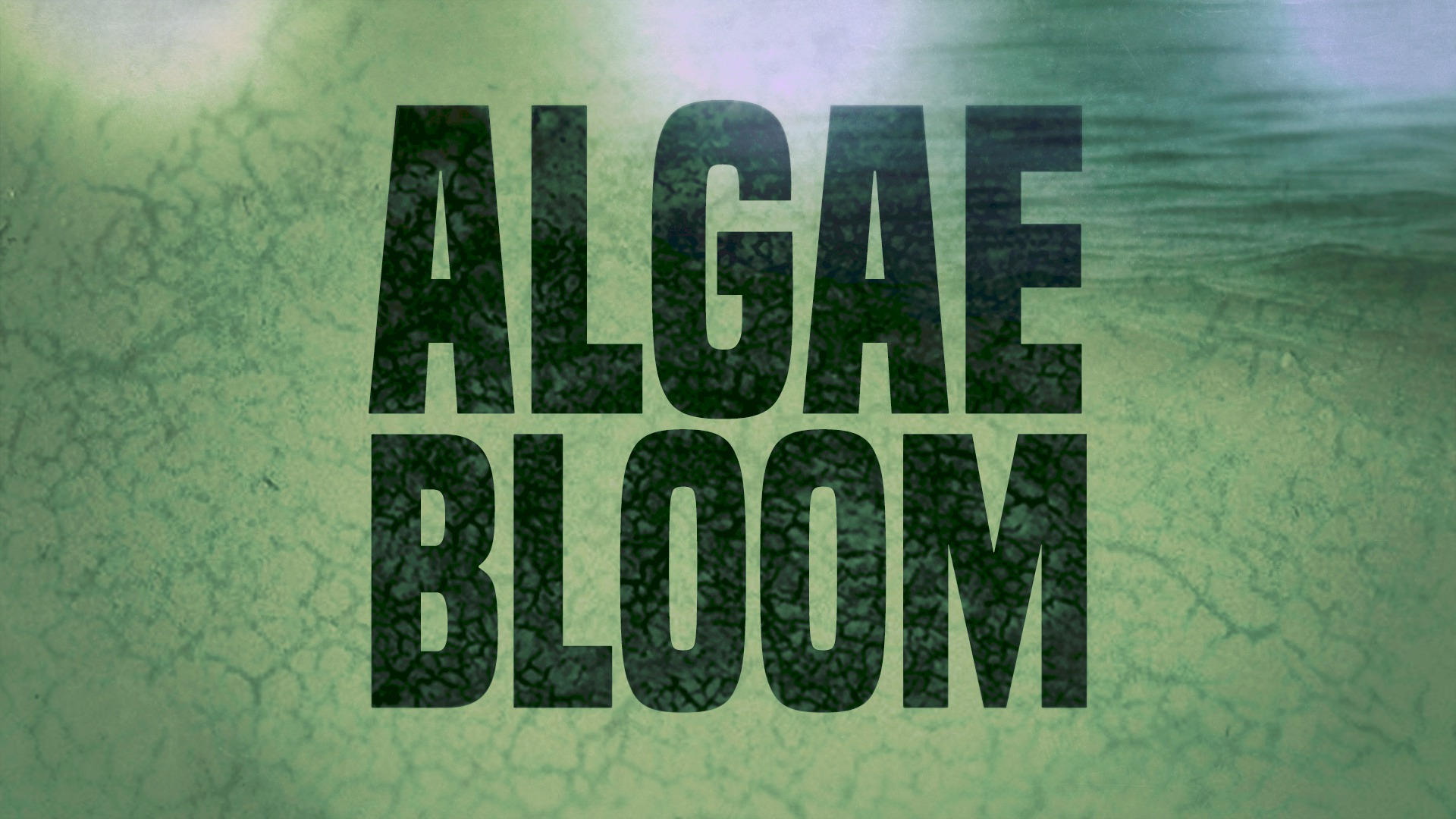 Algae bloom_385961