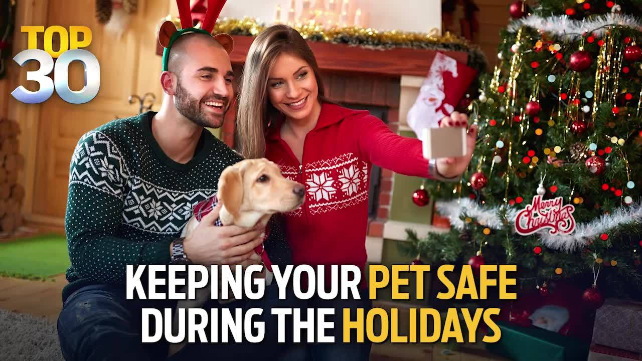 Top 30 | Holiday Pet Safety