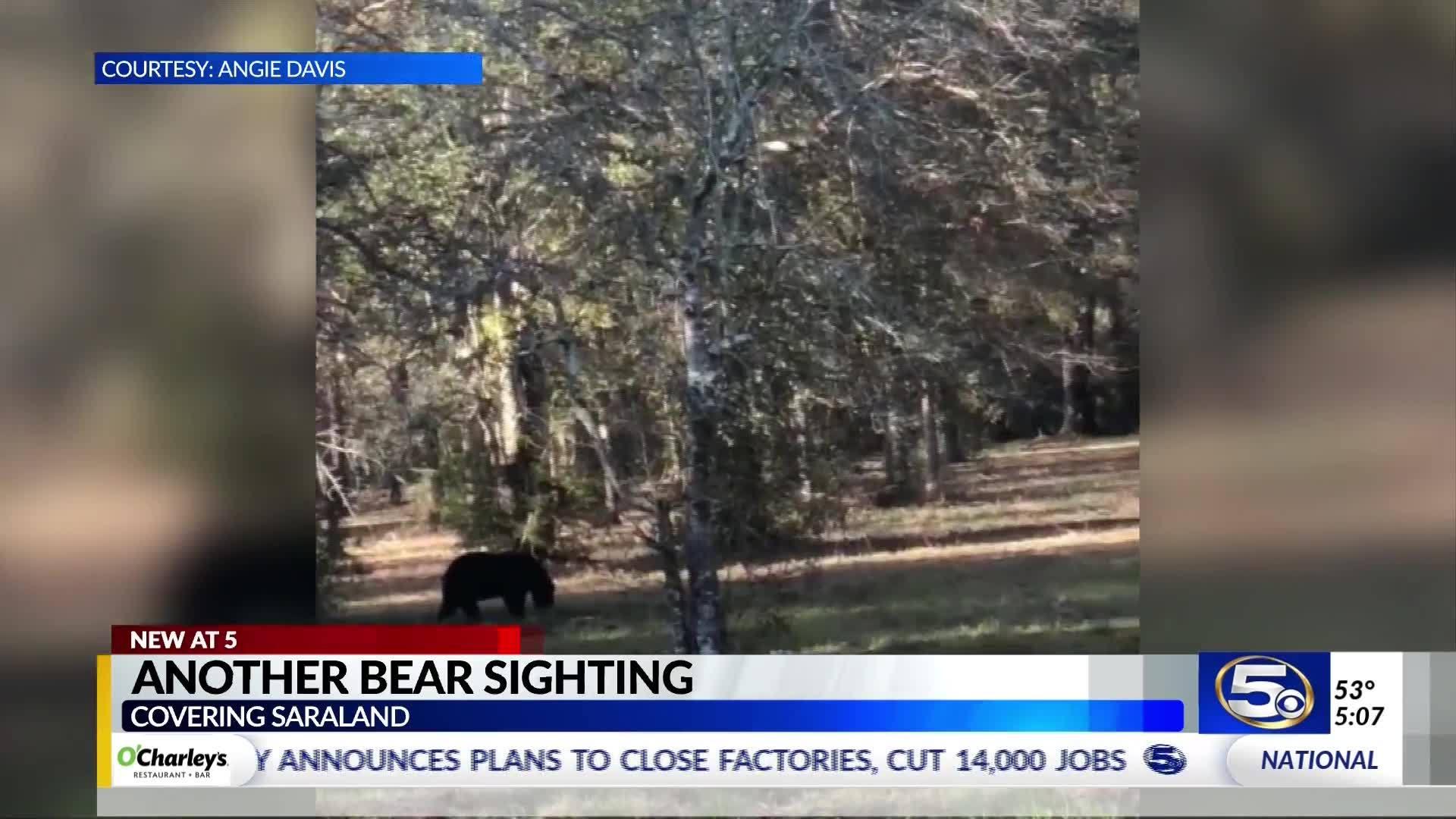 saraland_bear_sighting_6_20181128234149